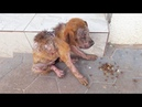 Rescue Lonely Stray Dog Begging For Foods From Strangers But Everyone Shoo Him Away