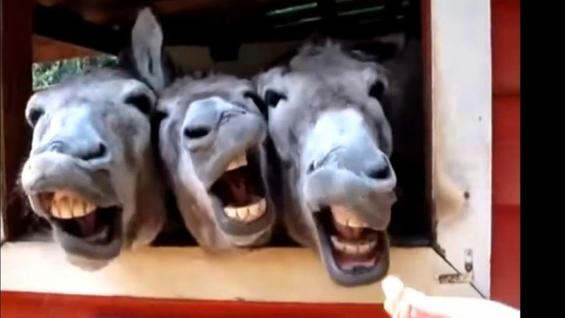 Funny Videos 2015 Grappige Dieren Maken Van Grappige Geluiden Compilatie