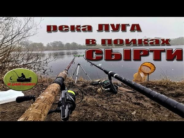 река Луга рыбалка СЫРТЬ ВИМБА Жабино Кингисепп весна