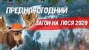 Загонная охота на лося. Зима 2020