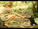 Увлекательный фильм «Смешные эпизоды в мире обезьян», на elegants «Элегант» Сумы Украина