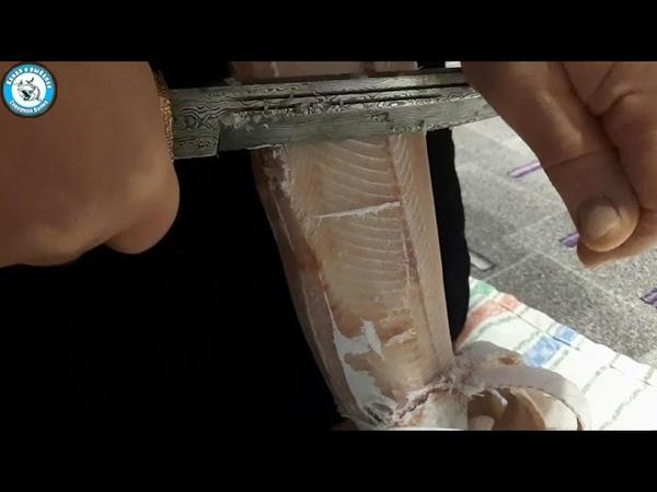 Строганина Северный омуль Нож Пластун Дамасская сталь Omul Damascus steel