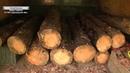 В районе Славкурорта полиция задокументировала кражу древесины - 25.05.2020