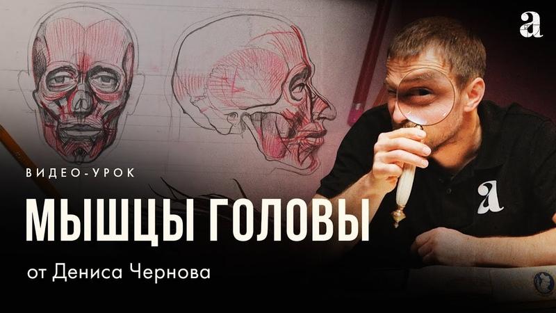 «МЫШЦЫ ГОЛОВЫ ЧЕЛОВЕКА» Видео-урок по анатомии от Дениса Чернова | Онлайн-школа Akademika