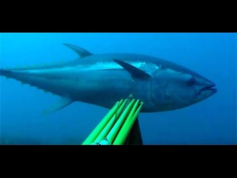 Spearfishing TOP Moments on Youtube Marlin Tunas and Amberjacks from all over the world