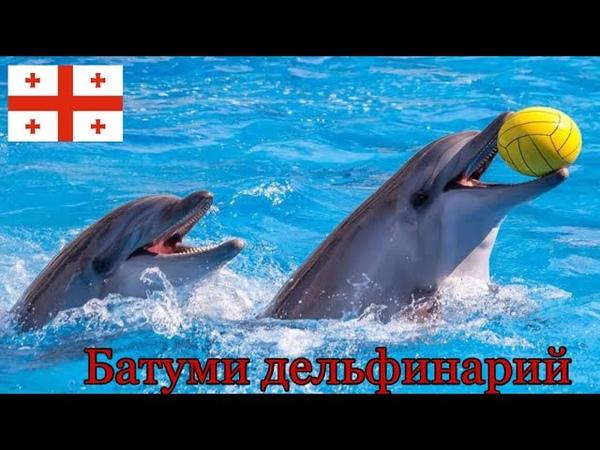 Батумский дельфинарий Шоу дельфинов Batumi Georgia