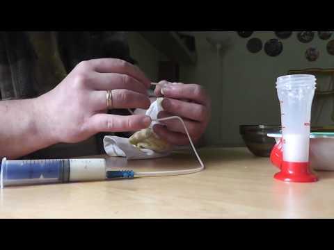 Кормление котёнка через катетер Feeding a kitten through a catheter
