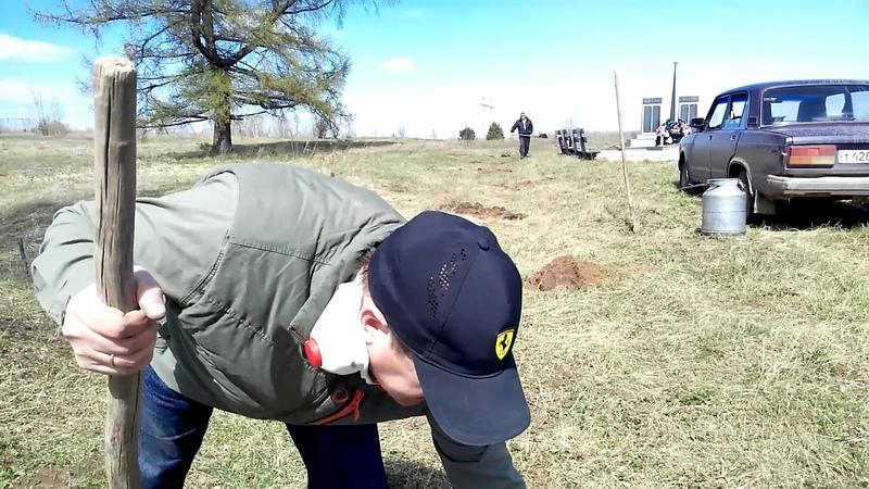 Посадка деревьев у памятника удалась благодаря депутату Ильгаму Галину в селе Хмелевка Нефтекамск
