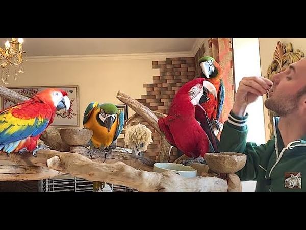 попугаи удивлены актер сериала сваты ел их корм parrots are surprised actor eats their food