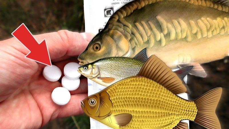 Копеечные аптечные таблетки а что творят с рыбой! Карась карп лещ плотва дуреет от этого вещества!