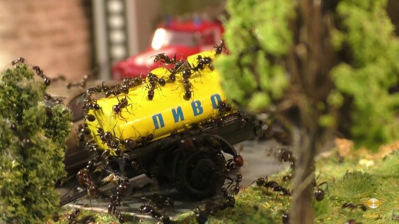 Город Муравьёв. Выставочный стенд с муравьями. | Ant city. Ants exhibition display