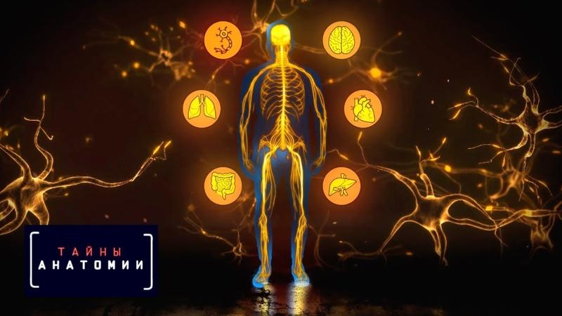 Нервная система | Тайны анатомии