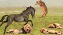 Лошадь в Деле! Лошадь против Собаки, Волка, Крокодила, Лошади, Быка