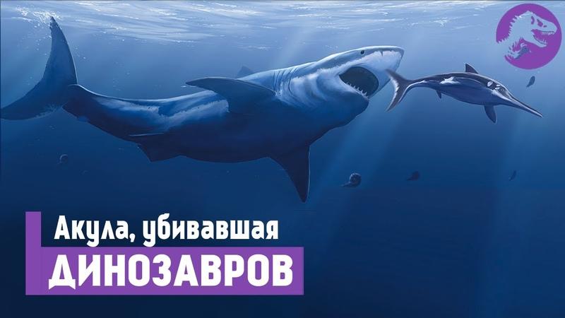 Кретоксирина - круче чем Мегалодон. Скоростная Акула Гинсу