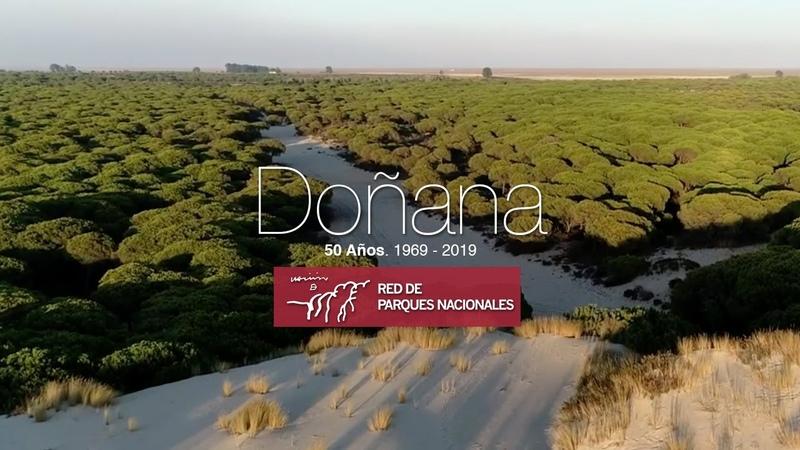 Parque Nacional de Doñana 💚 50 Aniversario