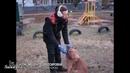 Правильная реакция на бесповодочную собаку питбулем