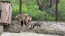 Храбрый волчонок! Зоопарк «СКАЗКА»!