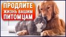 Единственный в мире КОРМ для кошек и собак, который ЛЕЧИТ, укрепляет здоровье и продлевает жизнь!