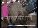 Похитители колтуна женщины-Маугли найдены и наказаны