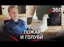 Командир отделения пожарной части более 15 лет разводит голубей