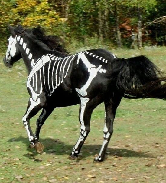 Призрачная лошадь