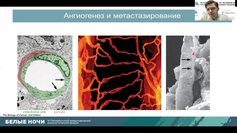 Hallmarks of Cancer или в чем сила опухоли Кушнарев В А