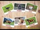 Домашние Животные.Звуки животных. Как говорят животные. Учим домашних животных.