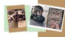 Совершенно Случайные Смешные видео про животных 13