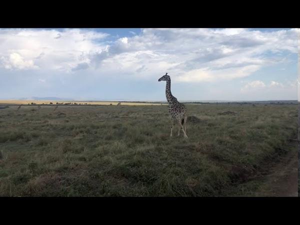 Maasai Mara National Reserve H I S Kenya Limited ERM Tours Safaris Pty LTD Mara Serena Safari Lodge